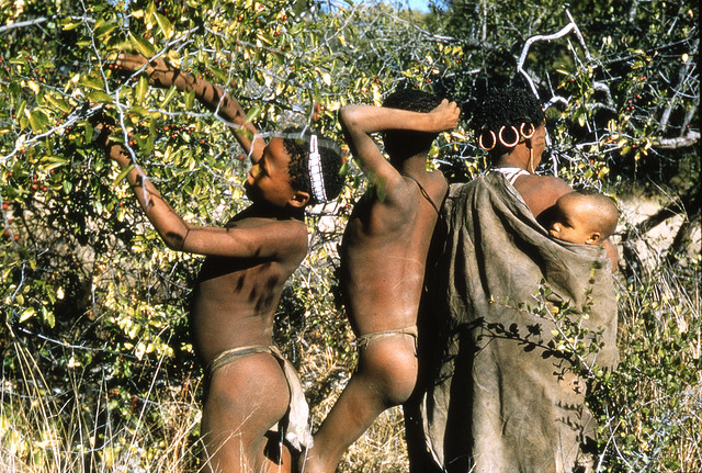 Ju/'hoansi Tribe Photos, 1950s-1970s John Marshall Photo Archive http://www.flickr.com/photos/der/267213074/